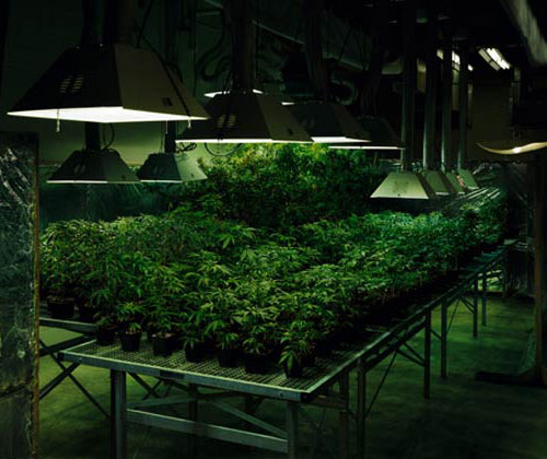 Best Grow Room Methods For Removing Humidity