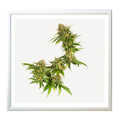 weed-print
