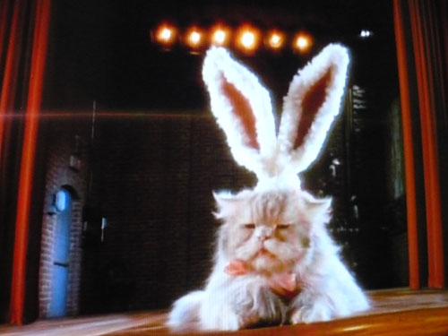 cat-bunny-cadbury