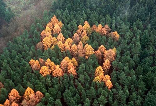 swastika-forest