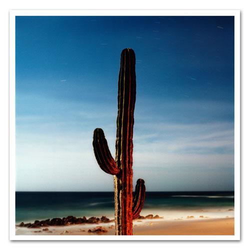 danny-fuller-cactus