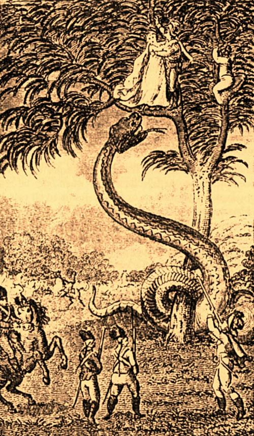 Worlds Biggest Snake Anaconda Found in Africas Amazon