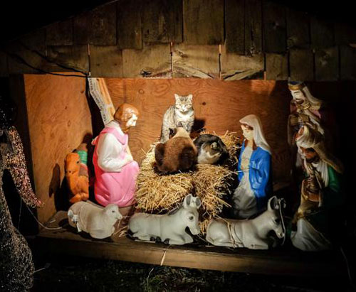 nativity-cats-brooklyn