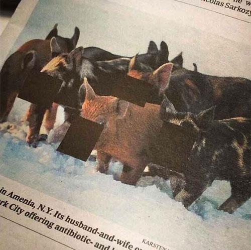 Censored-pigs-ny-times-malaysia