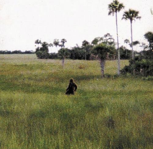 skunk-ape