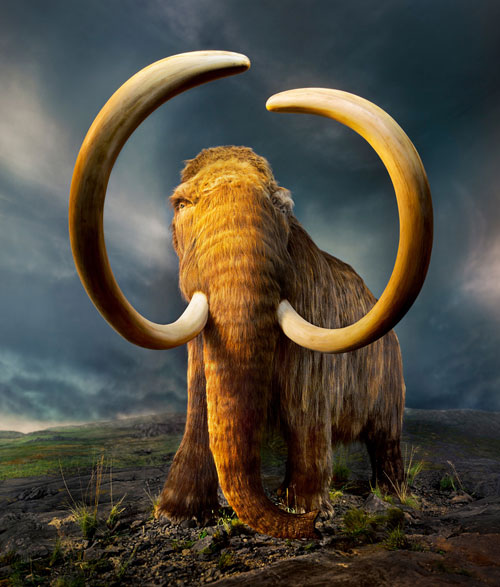 wooly-mammoth-de-extinction