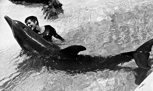 Margaret-Lovatt-dolphin-sex
