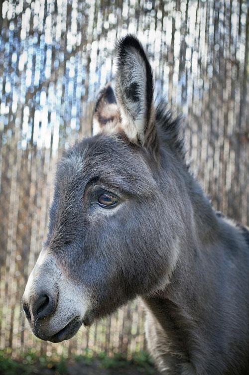 sad-donkey