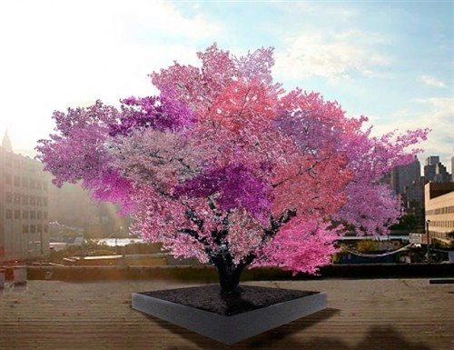 sam-van-aken-tree-of-40-fruits