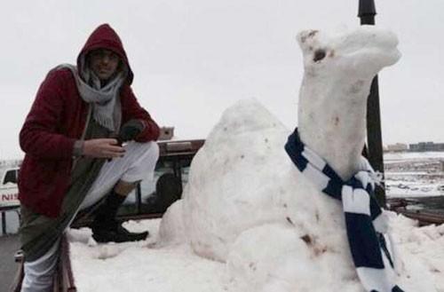 snow-camel