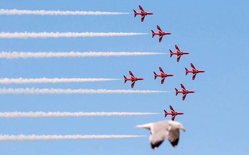 seagull-photo-bomb