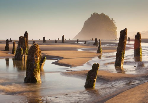 neskowin-ghost-forest-cascadia-subduction