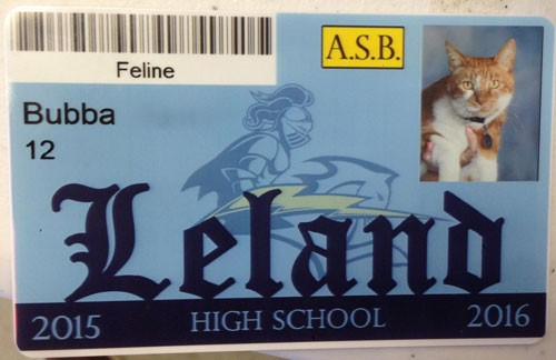 bubba-cat-high-school