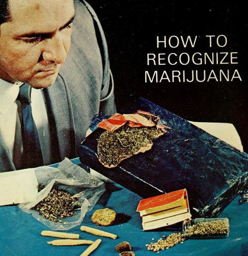 how-to-recognize-marijuana